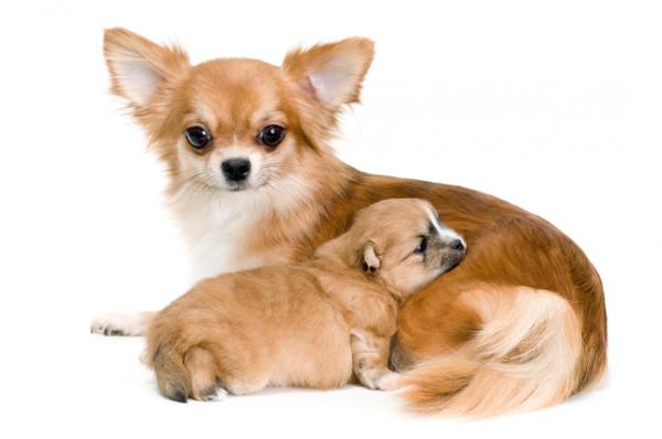 Cadela e seu filhote