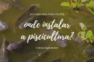 Sistema RAS para peixes: 4 dicas para instalar a piscicultura