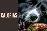 Quantas calorias um cão adulto deve ingerir?