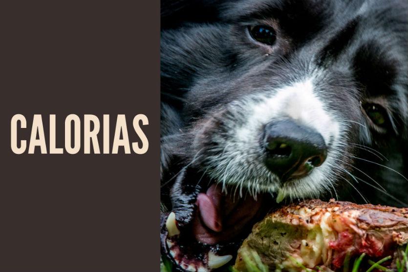 Quantas calorias um cão adulto deve ingerir?    Dicas Cursos CPT