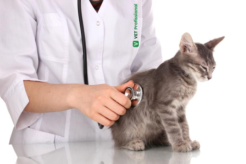 FeLV: A doença infecciosa felina que mais mata no Brasil   VetProfissional