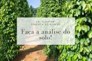 Vai plantar pimenta-do-reino? Faça a análise do solo!