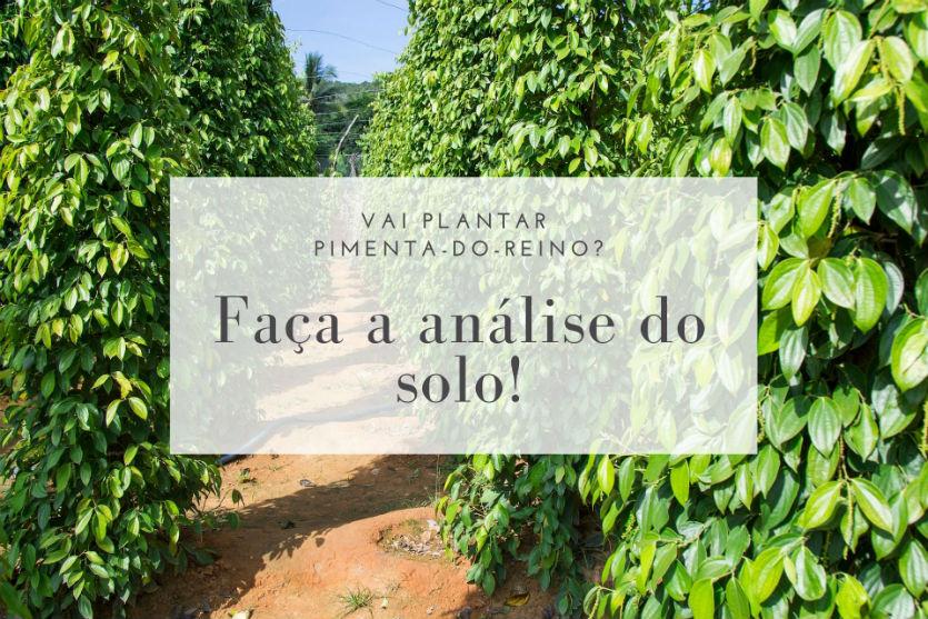 Vai cultivar pimenta-do-reino? Faça a análise do solo!   Artigos Cursos CPT