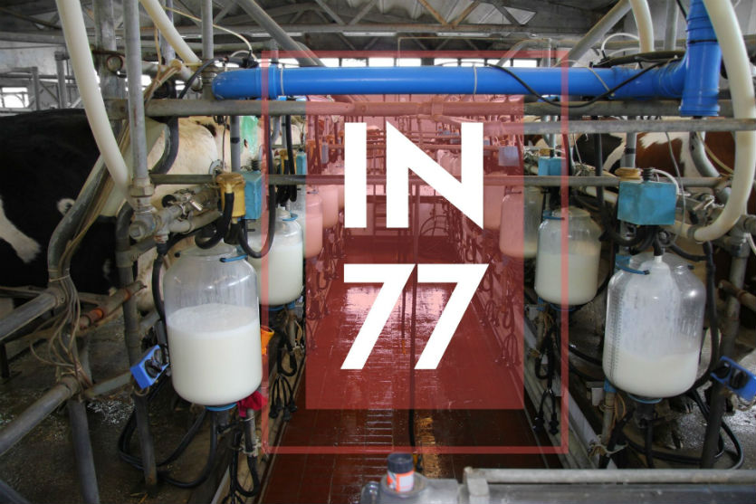 Pecuária de leite? Entenda a IN 77 e sua importância!   Artigos Cursos CPT
