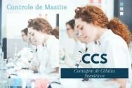 Pecuarista, você sabe o que é CCS e por que ele é importante?