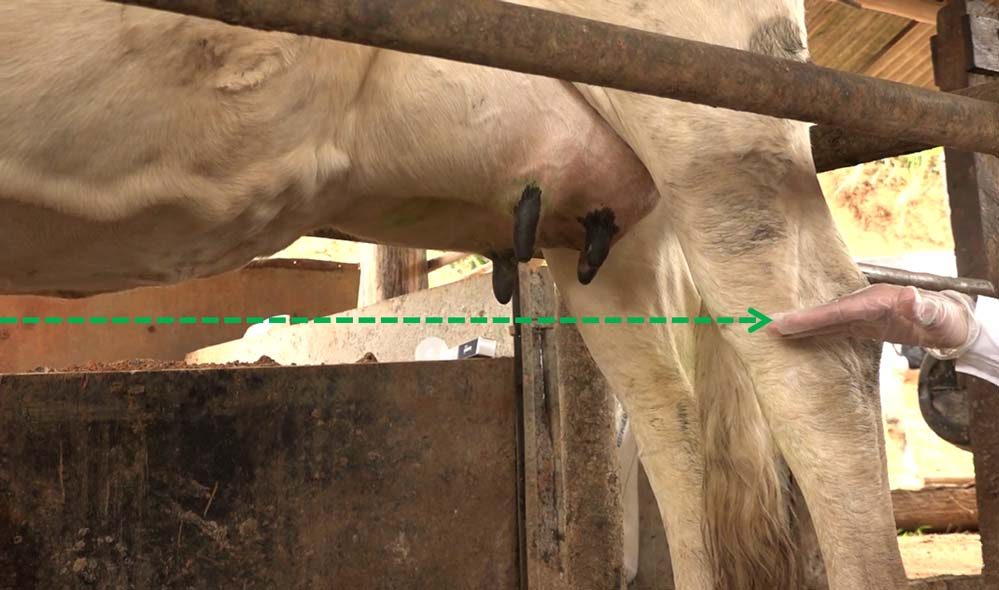 Pecuária de leite: mastite    Artigos Cursos CPT
