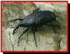 Pragas e doenças do coqueiro, identifique-as e elimine-as