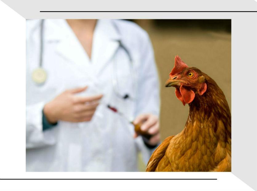 Vai vacinar galinhas? Conheça as 5 formas e faça a melhor escolha!   Artigos Cursos CPT