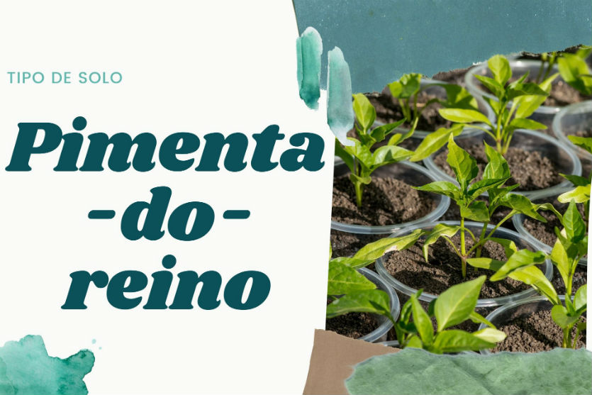 Qual o melhor tipo de solo para plantar pimenta-do-reino?   Artigos Cursos CPT