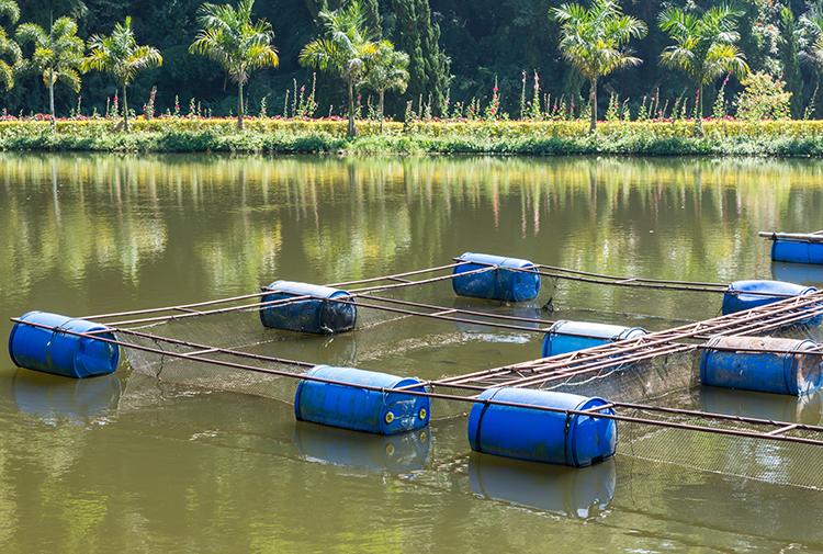 Qualidade da água - imagem ilustrativa