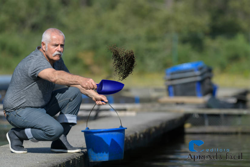 3 alimentos energéticos para peixes