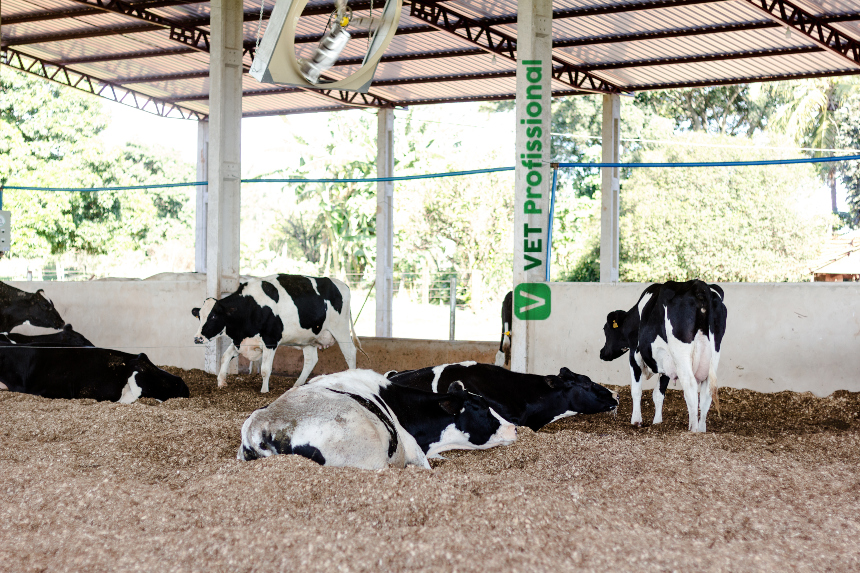 Sistema free stall: conforto animal e melhor qualidade do leite   Artigos VetProfissional