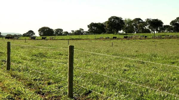 Você sabe quais são os métodos de manejo de pastagens mais usados?