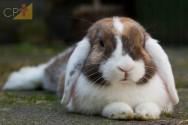 Tire suas dúvidas sobre criação de coelhos