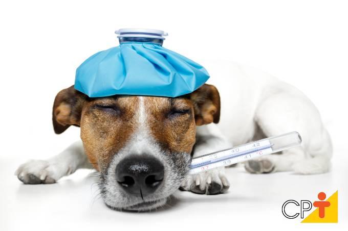 Aprenda como dar medicamentos a seu cão