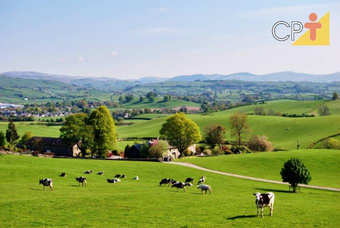 Descubra as diferenças entre chácara, sítio e fazenda