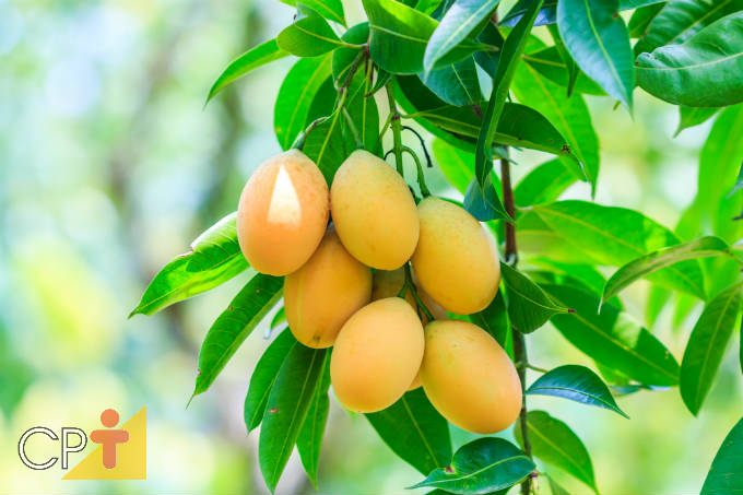 5 frutíferas que refrescam o ambiente no meio urbano