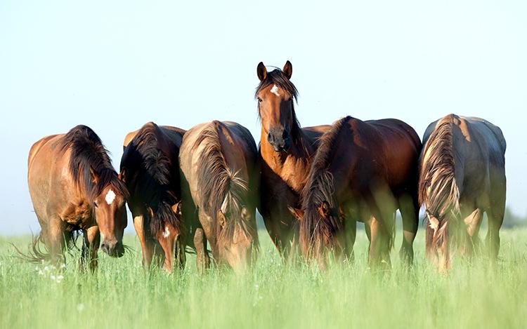Cavalos - imagem meramente ilustrativa