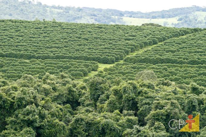 Cafeeiro: doenças causadas por fungos