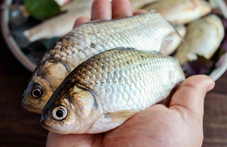 Peixes - imagem meramente ilustrativa