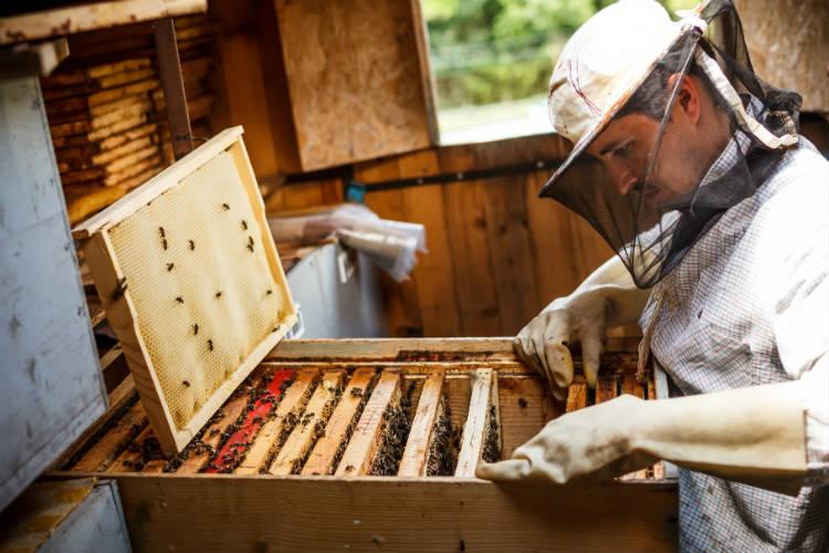 Tire suas dúvidas sobre implantação de apiário
