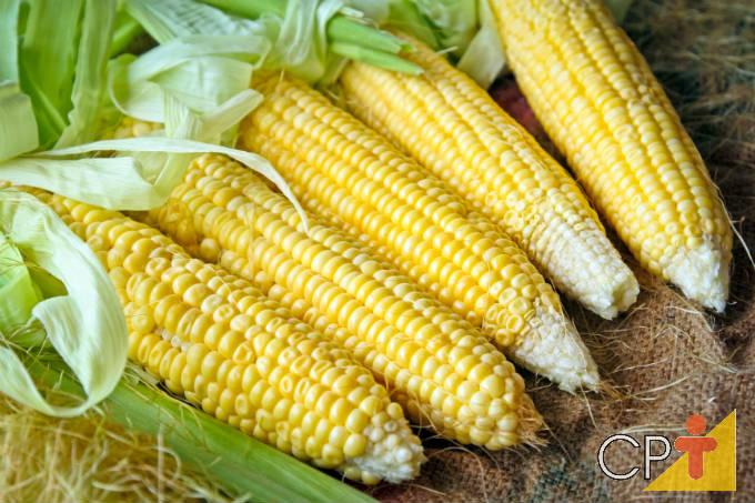 Aprenda sobre milhos especiais! Baixe nosso novo e-book sobre milho verde e milho de pipoca!