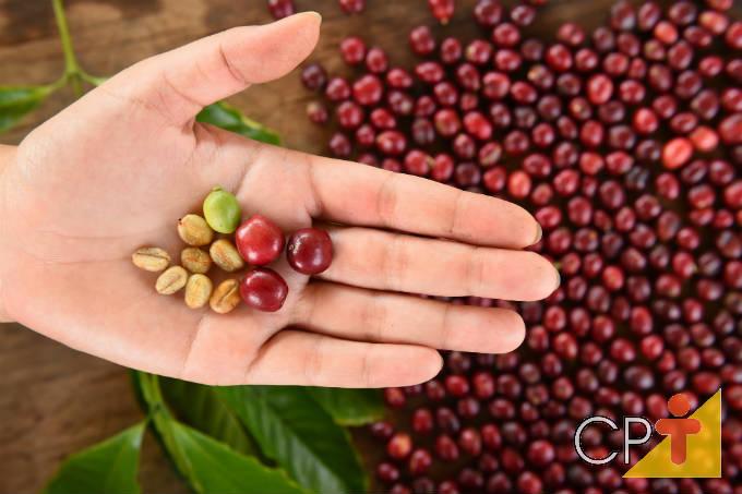 Torne-se um cafeicultor de sucesso! Baixe gratuitamente nosso guia especial!