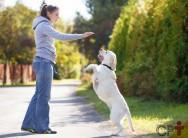 Para que você quer um cachorro? Responda antes de adotar ou comprar!
