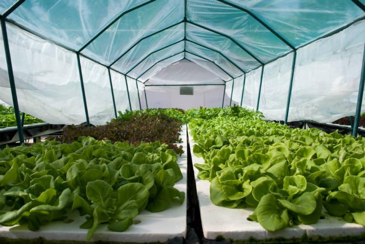 Construa estufa para hortaliças orgânicas e ganhe dinheiro!