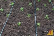 Dicas para evitar entupimento dos gotejadores de irrigação