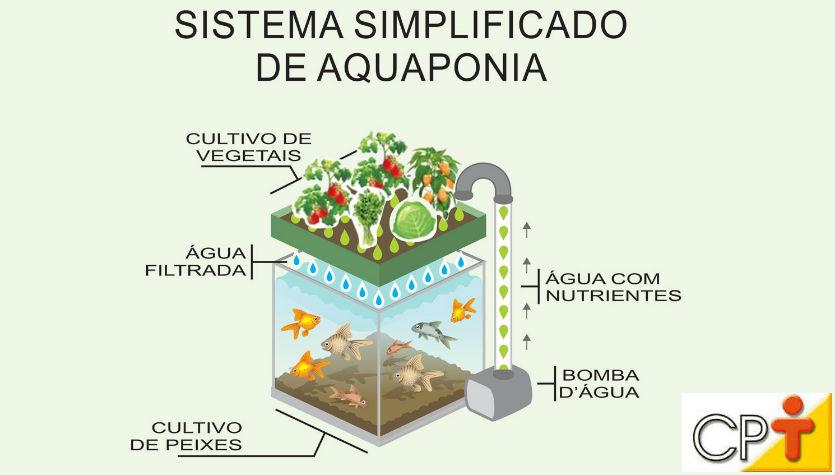 Como explicar a boa qualidade da água no sistema aquapônico?    Artigos Cursos CPT
