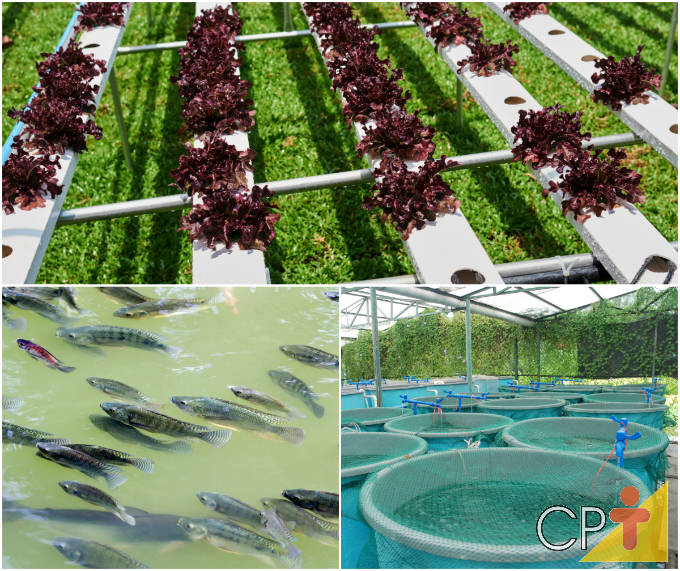 Quer se tornar um aquicultor de sucesso? Confira o novo Curso Produção de Peixes e Hortaliças no Sistema de Aquaponia