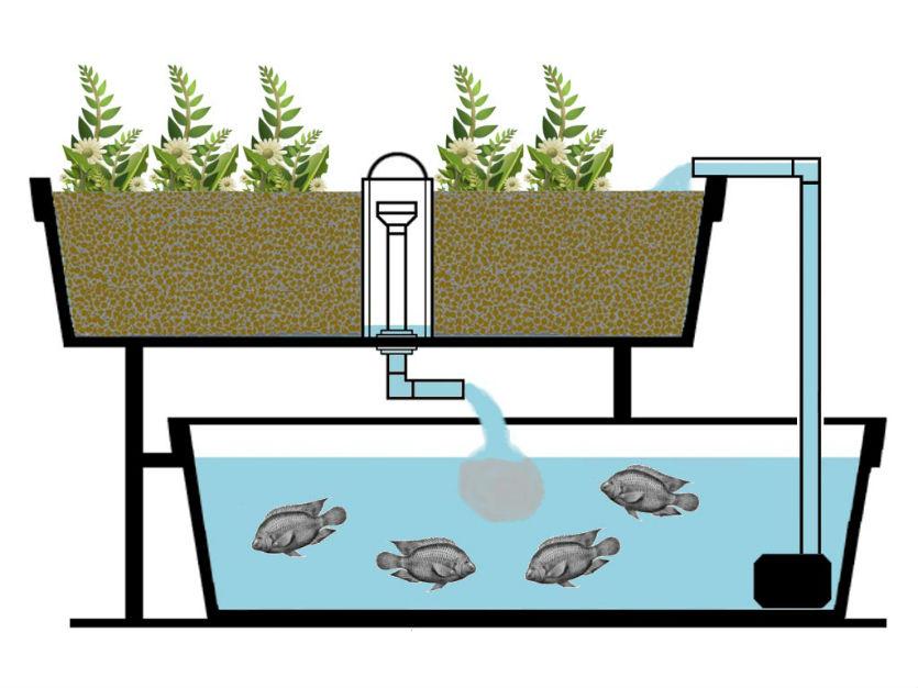 O sistema de aquaponia é sustentável. Certo ou errado?   Artigos Cursos CPT