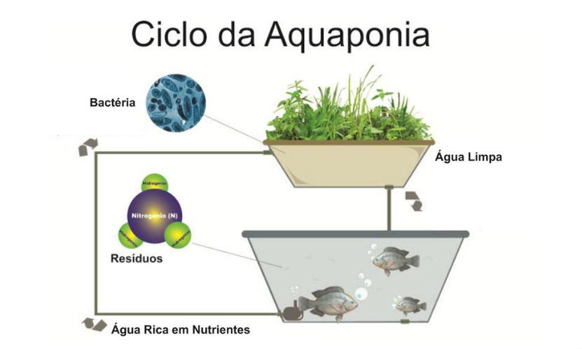 Qual é o maior desafio da Aquaponia? Garantir a qualidade da água!   Artigos Cursos CPT
