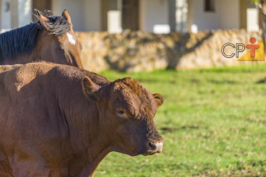 Equinos e bovinos regurgitam o alimento. Sim ou não?   Artigos Cursos CPT