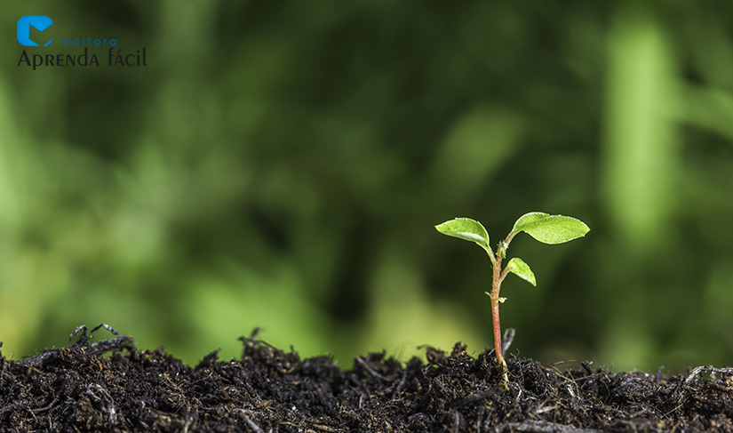 Planta nascendo - Imagem ilustrativa