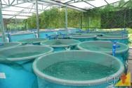 Criação de peixes: aeradores para oxigenação da água