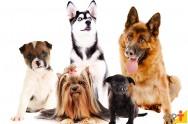 Cães: conheça as raças preferidas pelos brasileiros