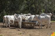Sal mineral para bovinos: com qual frequência oferecer?