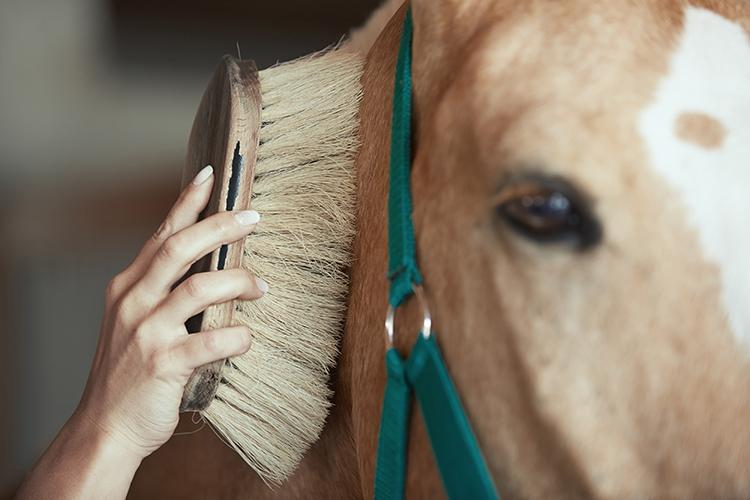 Cuidados com o pelo de cavalos - imagem ilustrativa