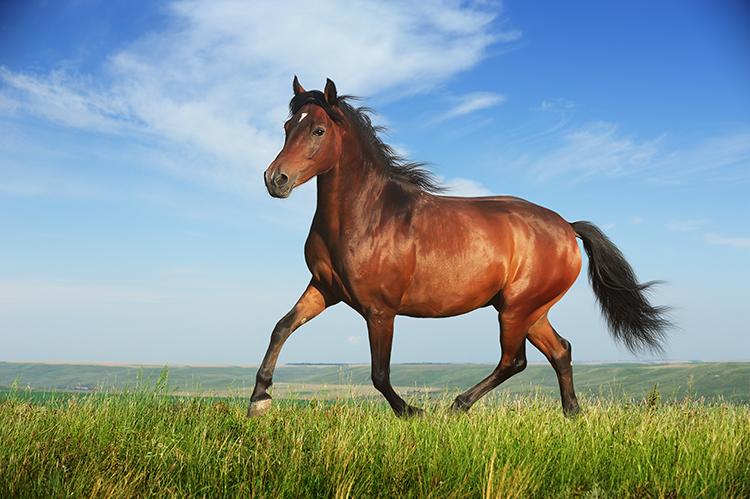 Cavalo solto