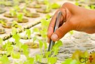 Sistemas de Aquaponia: quais plantas selecionar?