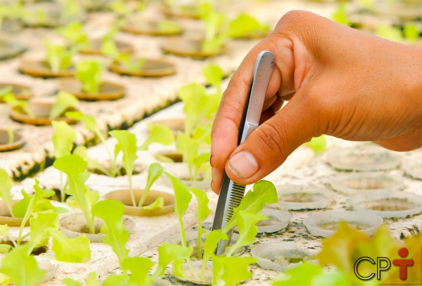 Sistemas de Aquaponia: quais plantas selecionar?   Artigos Cursos CPT