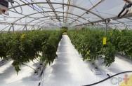Estufa para alimentos orgânicos? Controle a temperatura e a umidade