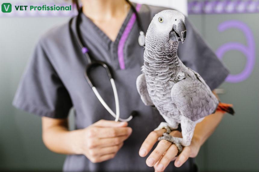 Precisando medicar passarinhos? Saiba como proceder por via oral   Artigos VetProfissional