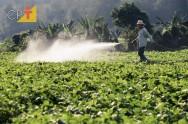 Saiba mais sobre defensivos agrícolas