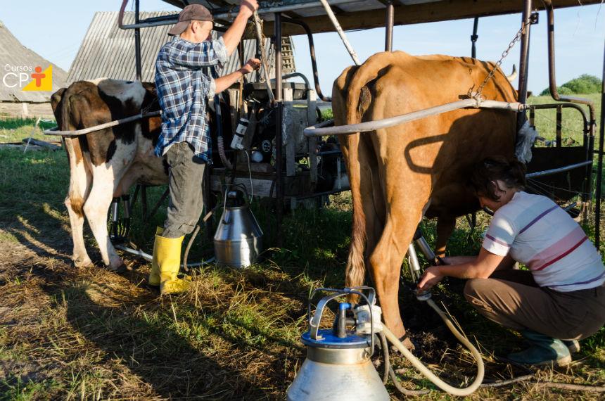 Sabe quem mais contamina o leite? O ordenhador. Saiba como!    Artigos Cursos CPT