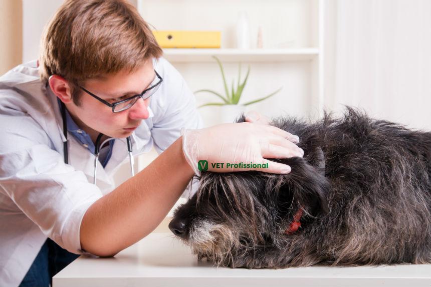 O que é possível diagnosticar observando a pele animal?   Artigos VetProfissional
