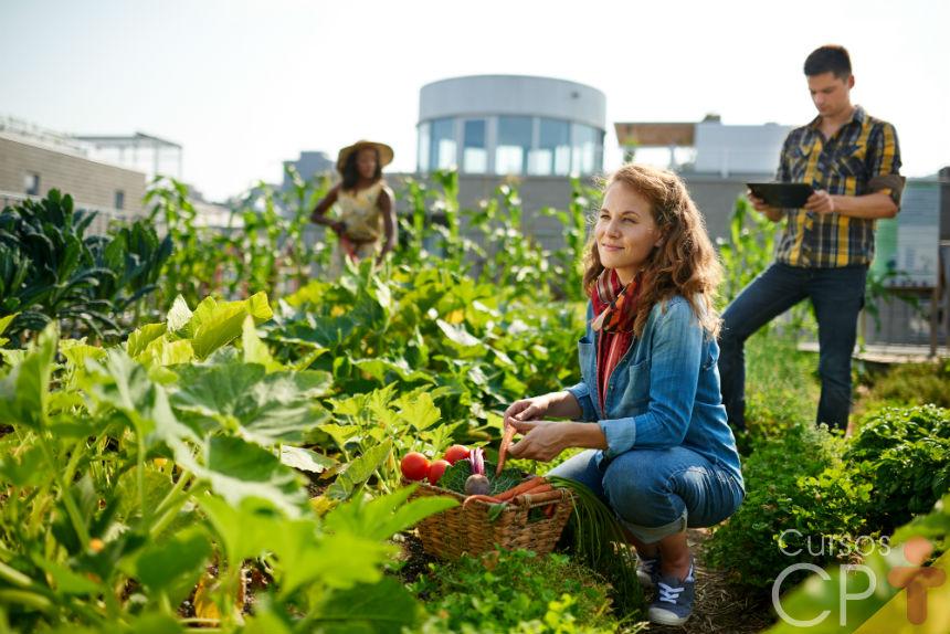 Alelopatia: o que é e por que é tão importante na agricultura orgânica   Artigos Cursos CPT