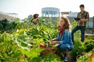 Alelopatia: o que é e por que é tão importante na agricultura orgânica